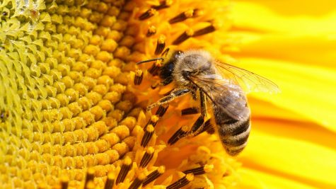Pollinating bees replaced by drones